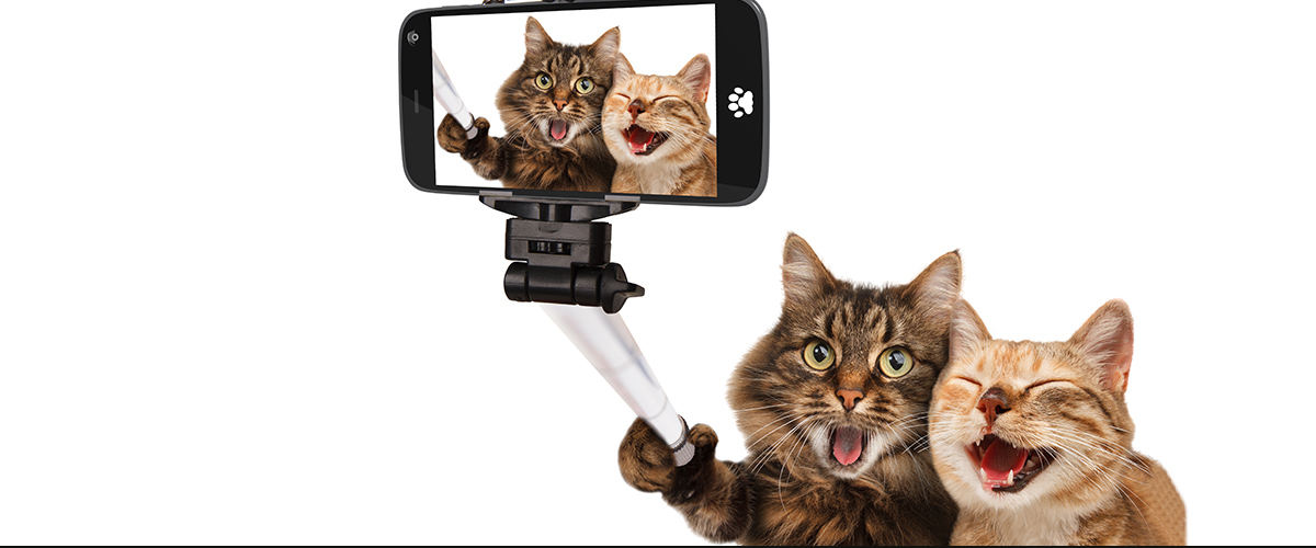 two cats taking selfie photo - demonstrate humor and fun