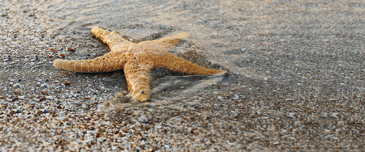 yellow, live starfish at the shore with the waves and water just covering the starfish sets the mood for telling a great business story