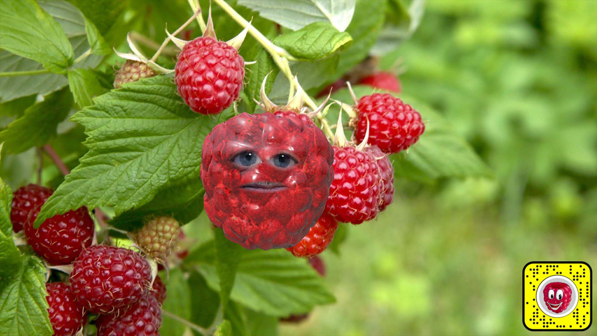 Snap Camera filter lens for being a raspberry on a bush